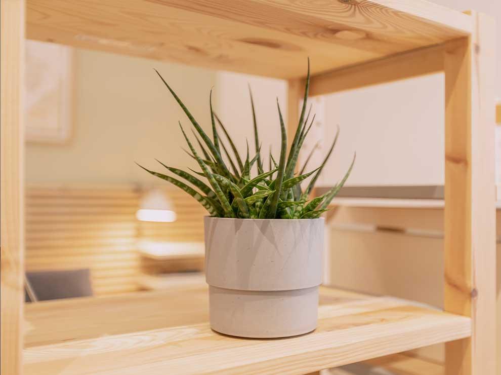Planta pequeña en un recipiente de cemento.
